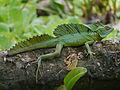 Tortuguero, Costa Rica (14231012814).jpg