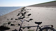 Tourist cycle on texel beach