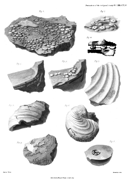 Transactions of the Geological Society, 1st series, vol. 2 plate page 0613.png