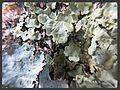 Tree Lichen.jpg