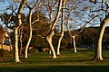 Trees, Casa Conejo, CA.jpg