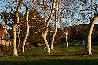Casa Conejo, California - Trees in Borchard Community Park.