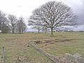 Trees and old walls - geograph.org.uk - 1800090.jpg
