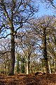 Trees in Broomy Inclosure, New Forest - geograph.org.uk - 668452.jpg