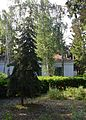 Tsiurupynsk Arboretum of the Lower Volga Dnieper Scientific Research Station 23 (YDS 0681).jpg