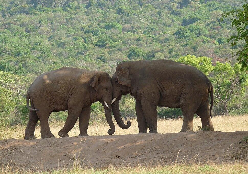 Two-Elephants