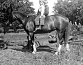 Two unidentified boys on a horse on the Warren family farm, Bellevue, Washington, ca 1913 (WASTATE 1811).jpeg