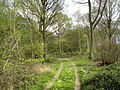 Tyler's wood - geograph.org.uk - 257162.jpg