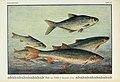 Unsere Süßwasserfische (Tafel 42) (6102604885).jpg