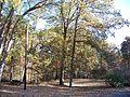 Uwharrie National Forest - panoramio.jpg