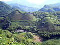 VM 5332 Muyu Tea plantations on valley slopes north of town.jpg