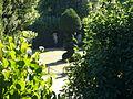 V Sciarra esedra arborea topiario 1170973.JPG