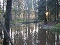Vantaa river (10-2008) - panoramio - pan-opticon (2).jpg