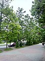Veliky Novgorod, Novgorod Oblast, Russia - panoramio (237).jpg