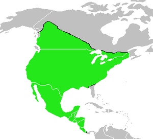 Warbling vireo - Image: Vireo gilvus map