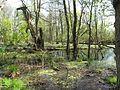 Vogelschutzgebiet Altfriedland 06.jpg