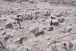 Methoden van het dateren sedimentaire rotsen