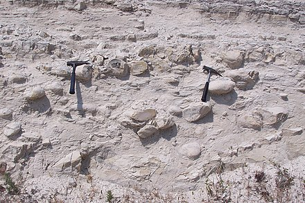 Chert concretions in chalk, Middle Lefkara Formation (upper Paleocene to middle Eocene), Cyprus Vuursteenknollen in krijtgesteente.jpg