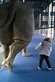 WLANL - vdt.rolf - neushoorn.jpg