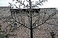 WLM14ES - Casa Bassols (actual Reial Cercle Artístic) Barri Gòtic, Barcelona - MARIA ROSA FERRE (3).jpg
