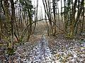 Wanderweg - panoramio (38).jpg