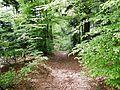 Wanderweg - panoramio (47).jpg