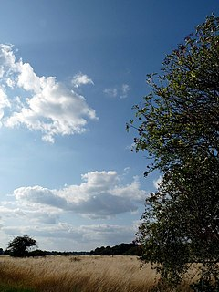 Wanstead Flats Southernmost part of Epping Forest, England