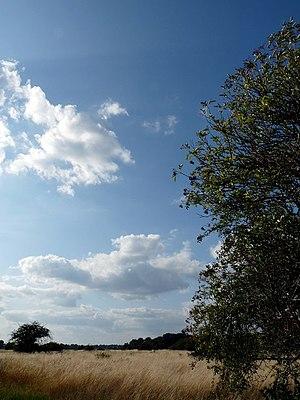 Wanstead Flats - Wanstead Flats, grasslands and Epping Forest