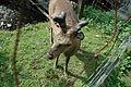 Warstein-Wildpark 2007-05-20 16-48-02 (1175758576).jpg