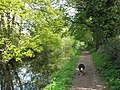 Wendover Arm, The canal overshadowed by trees - geograph.org.uk - 1311789.jpg