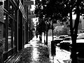 Wet walk (209716276).jpg