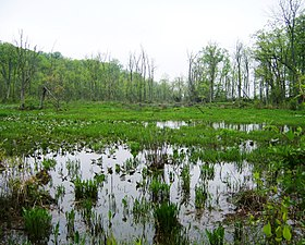 Wetlands in Mason Neck SP, Virginia - 1.jpg