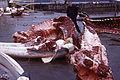 Whale skinning 04.jpg