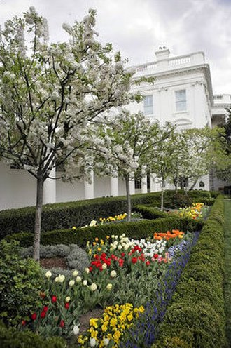 White House Rose Garden - Catherine crabapple trees in bloom, bordered by tulips, primrose and grape hyacinth. The West Colonnade, designed by Benjamin Henry Latrobe and Thomas Jefferson, can be seen in the background.