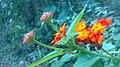 Wild flower22.jpg
