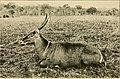 Wild game in Zambezia (1914) (14751224575).jpg