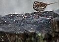 Wildlife birds 6 - West Virginia - ForestWander.jpg