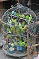Wildlife trade - crowded birds.jpg
