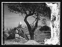 Woman & tree, Bethlehem LOC matpc.12101.jpg