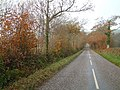 Wooded lane near Nutcombe Farm - geograph.org.uk - 82932.jpg