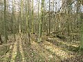 Woodland, Invermay - geograph.org.uk - 691242.jpg