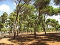 Woods Park in Abu Kabir - Tel Aviv.JPG