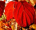 XN Autumn leaves 351.jpg