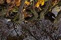 Yelagin-Island roots leafs.jpg