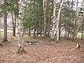 Yuzhno-Sakhalinsk - Forest near Santa Hotel.JPG