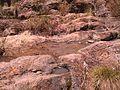 Zapopan, Jalisco, Mexico - panoramio (24).jpg