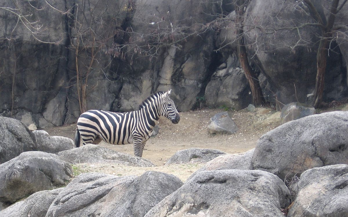 The Maryland Zoo in Baltimore - Wikipedia