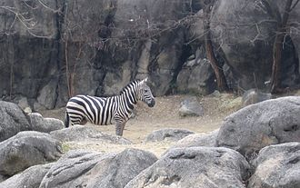Druid Hill Park - The Maryland Zoo is located in the center of the park.