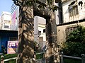 Zhang's Chastity and Filial Piety Memorial Stone Arch Hsinchu 07.jpg