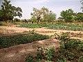 Zone de maraîchage à Zandkom.jpg